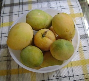 Yummy, yummy, yummy common mangoes. Before you eat one of these make sure you have dental floss.